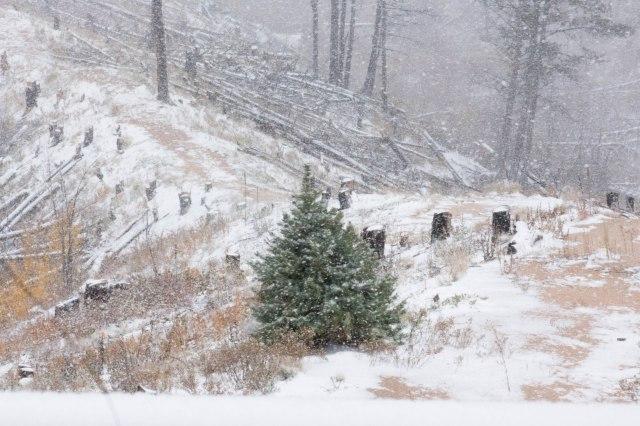 Winter Wonderland (10 of 13)