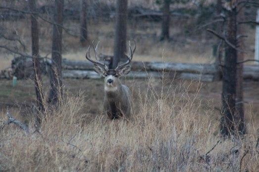 Deer (42 of 32)
