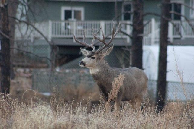 Deer (49 of 32)